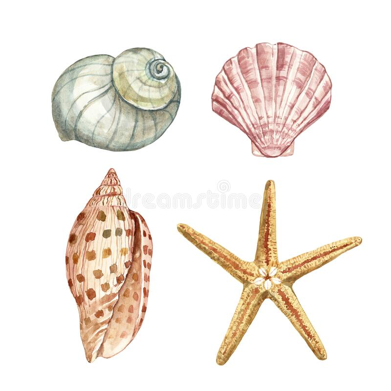 Free Hand Painted Illustration Of Seashell And Starfish. Sea Shells, Isolated On White Background. Underwater Animals Illustration Royalty Free Stock Photography - 172592437