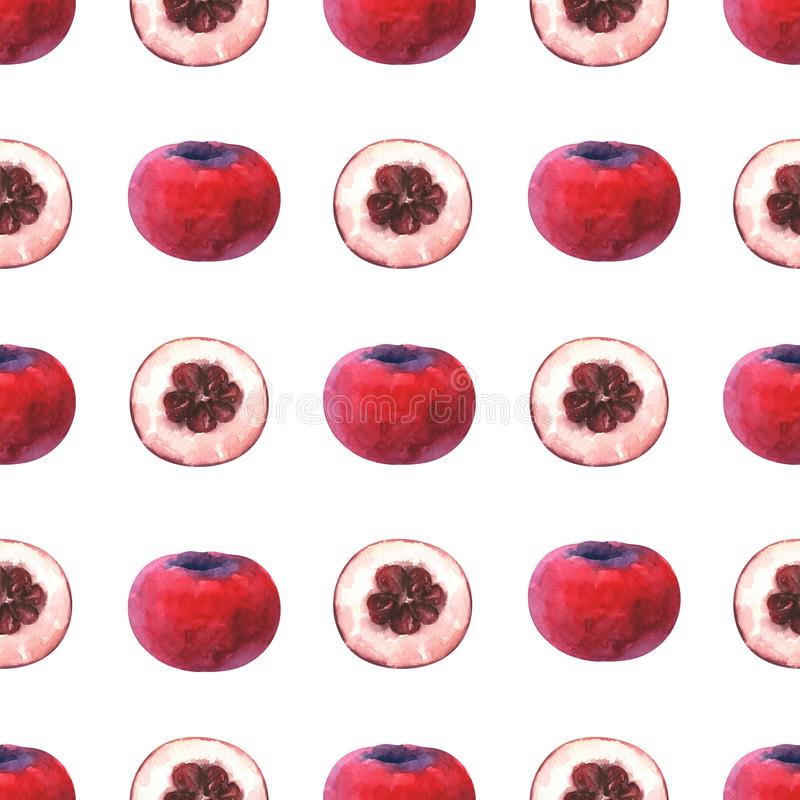 Minimalist seamless pattern with watercolor slices and whole velvet apple stock illustration