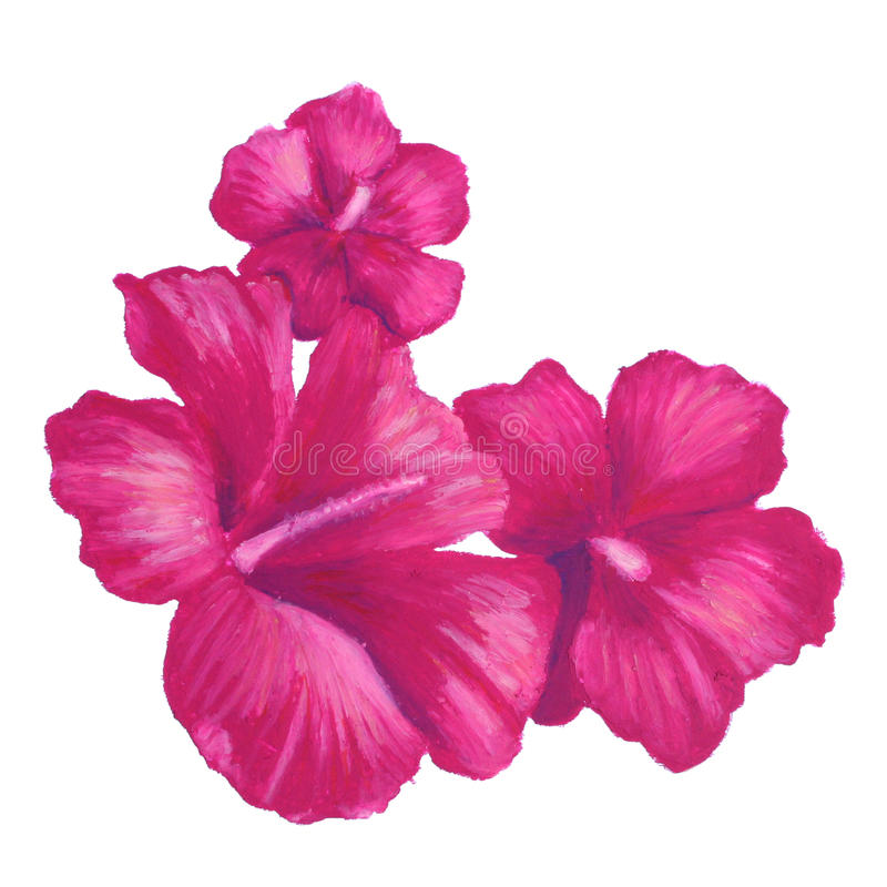 Hand painted oil pastel drawing of pink hibiscus flower. Design for clip art or graphic design use on business cards, posters, web, wedding announcements stock images