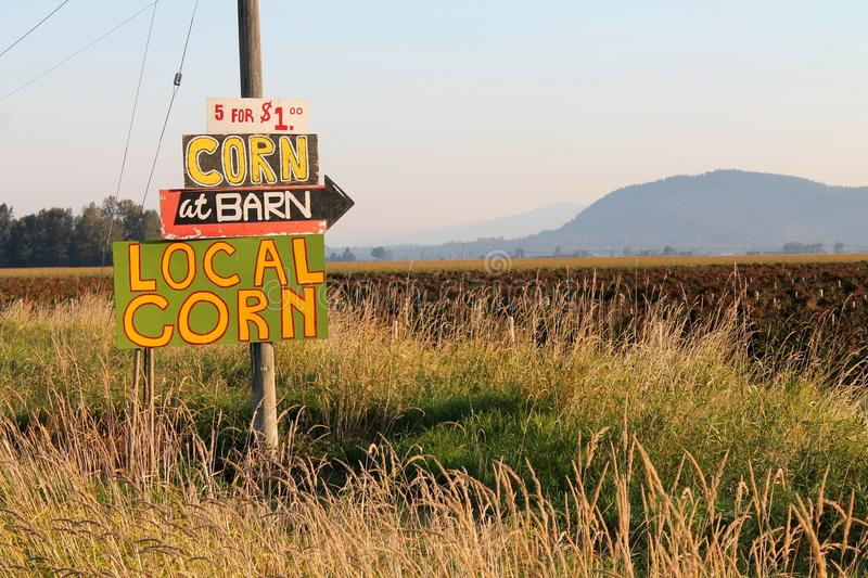 Hand painted sign offering local corn for sale in rural Washington state stock photography