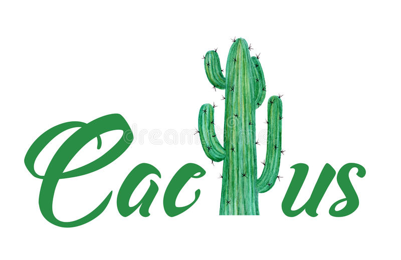 Hand painted watercolor of Cactus with text isolated on white background stock illustration