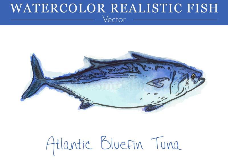 Hand painted watercolor edible fish. Vector design royalty free illustration