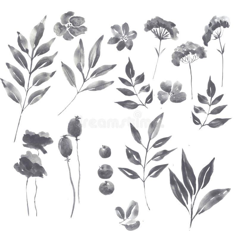 Watercolor graphite floral set vector illustration