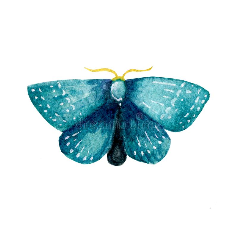 Hand painted watercolor illustration of moth. Moth pattern clip art isolated on white background. stock illustration