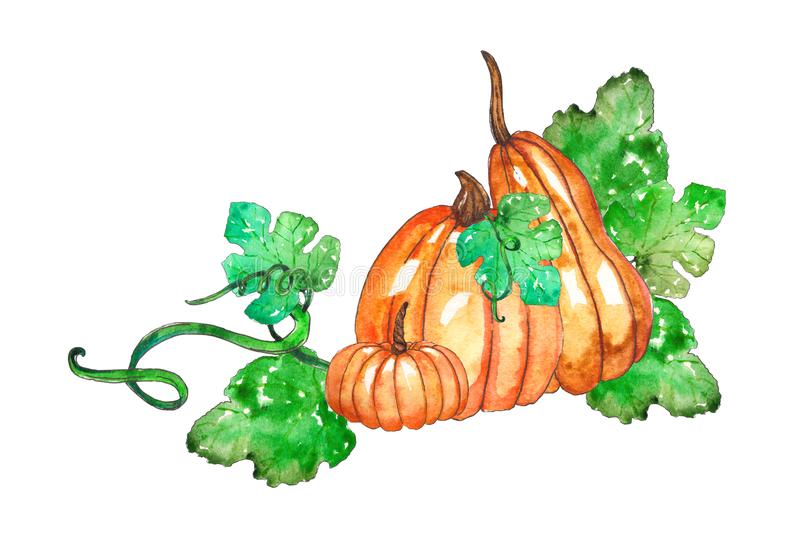 Hand painted watercolor pumpkin composition vector illustration