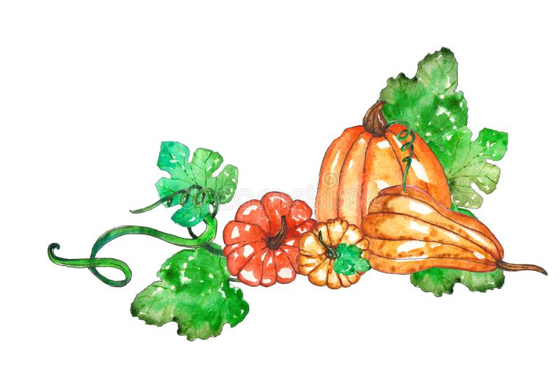 Hand painted watercolor pumpkin composition royalty free illustration