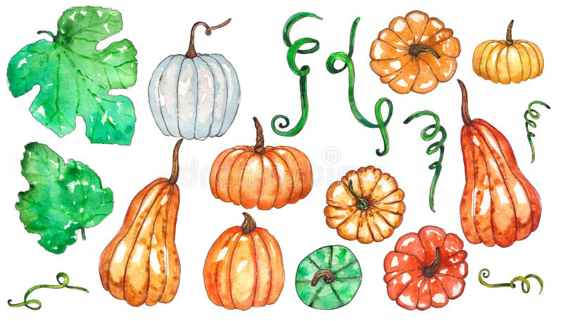 Hand painted watercolor set of pumpkin and leaves vector illustration