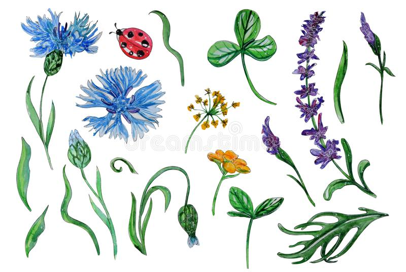 Hand painted watercolor set of spring flowers stock illustration