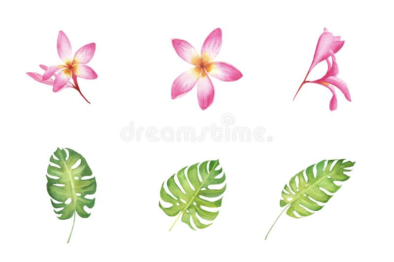 Watercolor set of tropical hibiscus flowers and monstera leaves isolated on white background. royalty free illustration