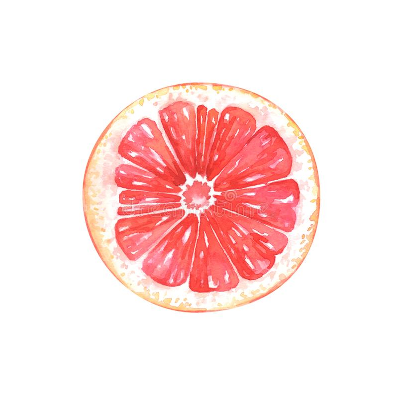 Hand painted watercolor slice of pink grapefruit royalty free stock photos