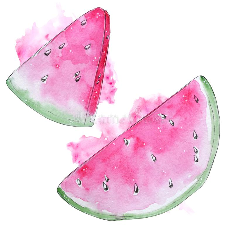 Hand painted watercolor watermelon isolated on white background stock illustration