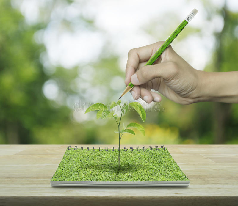 Hand with pencil drawing a tree growing from an open book on woo stock photography