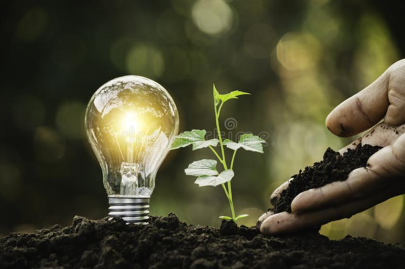 Light bulb with young plant for energy concept put on the soil in soft green nature background.  royalty free stock image