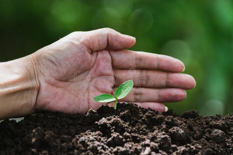 Hand of person protection growing young plant on fertile soil for agriculture or save earth,nature concept.  royalty free stock photos