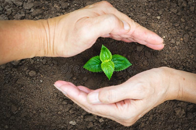 Hand of person protection growing young plant on fertile soil for agriculture or save earth,nature concept. royalty free stock image
