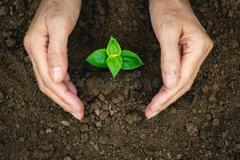 Hand of person protection growing young plant on fertile soil for agriculture or save earth,nature concept. stock photos