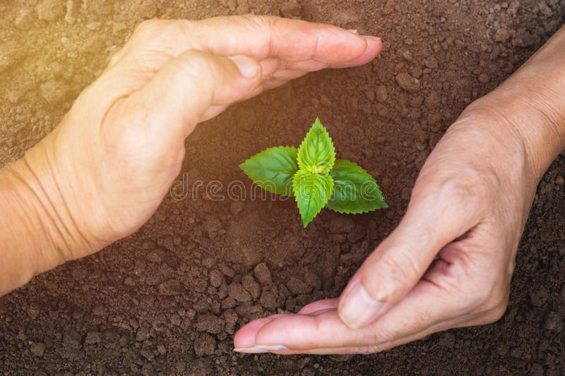 Hand of person protection growing young plant on fertile soil for agriculture or save earth,nature concept. stock image