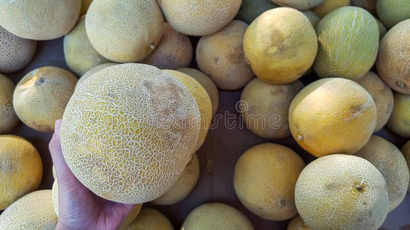 Hand picking a melon. To buy royalty free stock photography