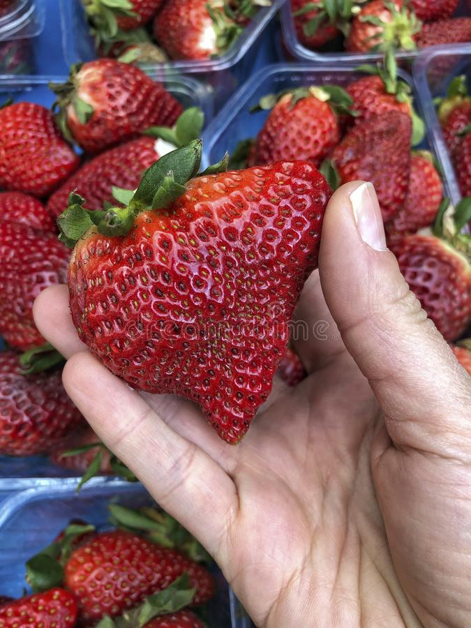 Hand picks ripe strawberry fruit at market royalty free stock image