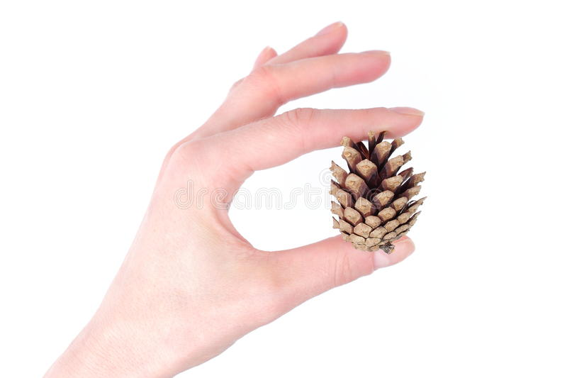 Download Hand With Pine Cone On White Background Royalty Free Stock Images - Image: 33984809