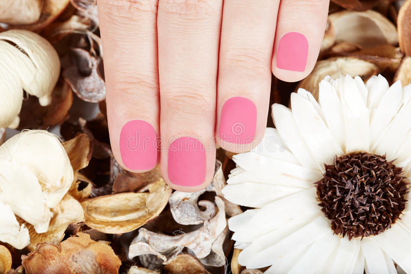 Hand with pink matte manicured nails. On dry flowers background royalty free stock image