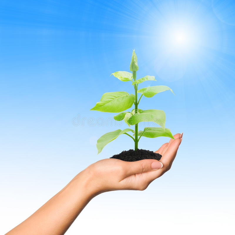 Hand with plant royalty free stock photos