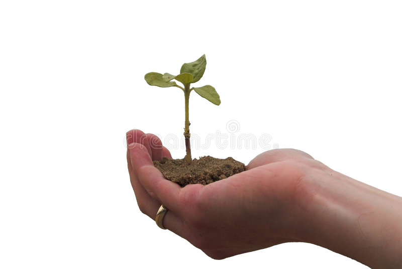 Hand + plant stock images