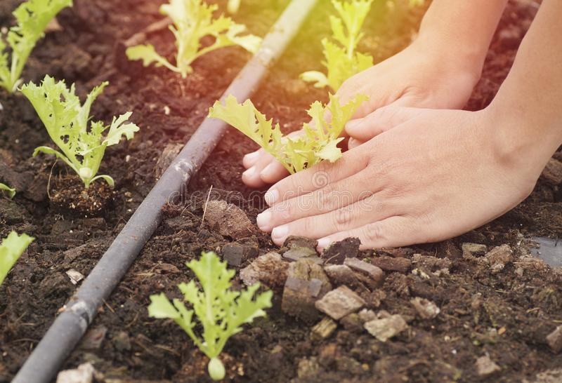 hand planting stock photography