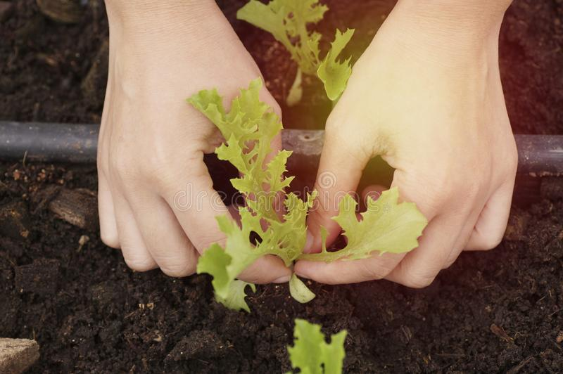 hand planting in farm stock photo