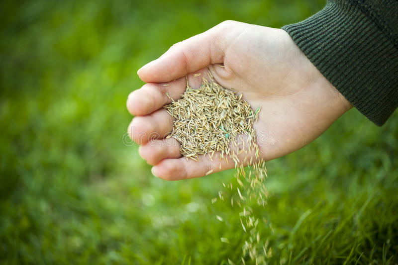 Hand planting grass seeds royalty free stock photography