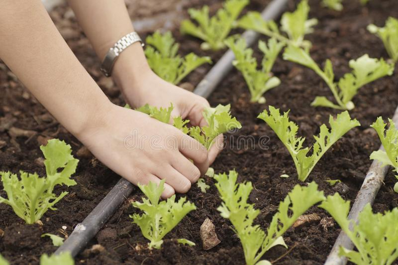 Hand planting royalty free stock photography