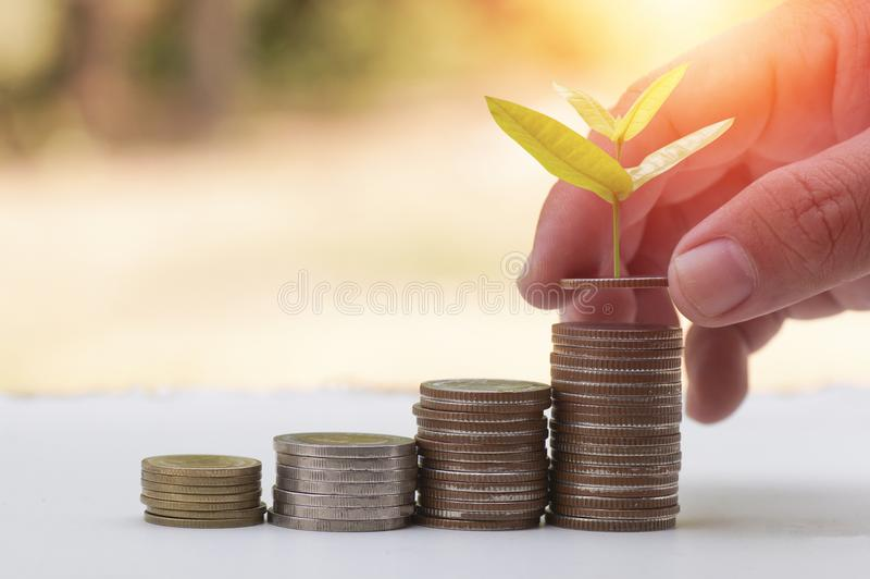 Hand planting new tree growing up and stacked of money coins, concept as success stock photos