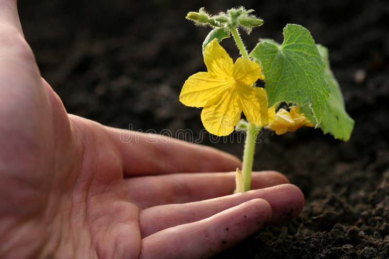 Hand planting plant stock images