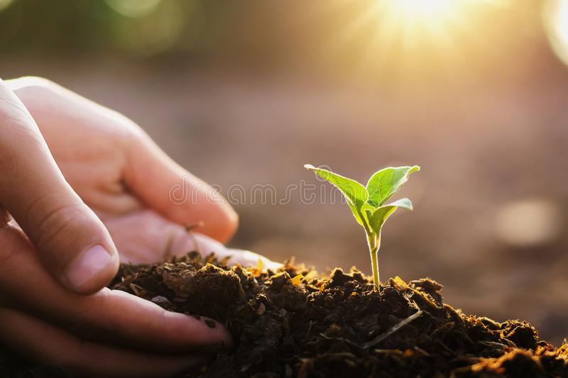 hand planting small tree and sunrise in garden. concept green world royalty free stock photos