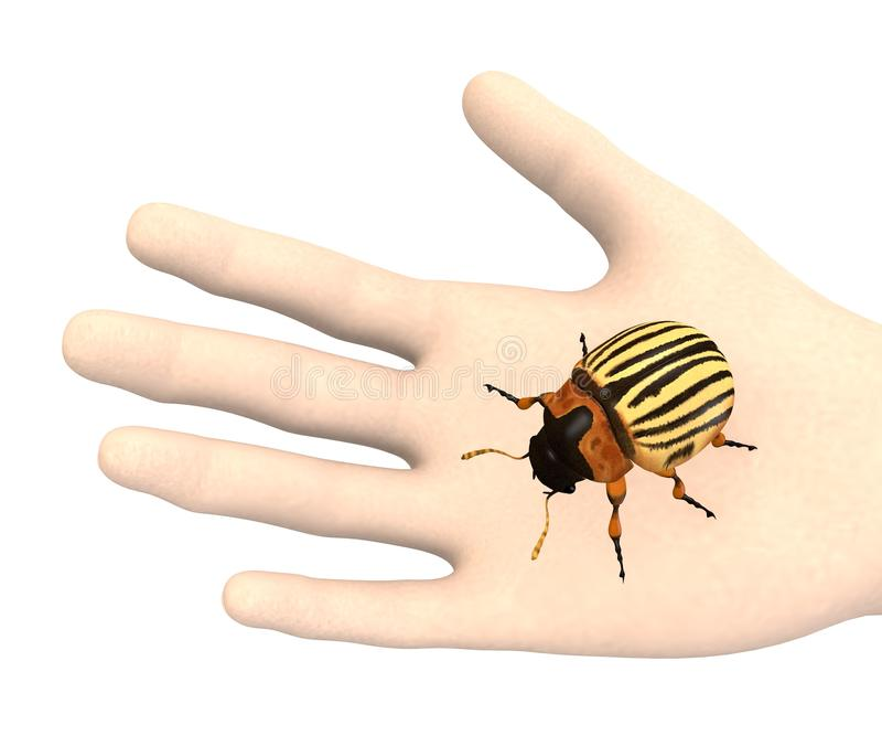 Download Hand With Potato Beetle Stock Images - Image: 24851424