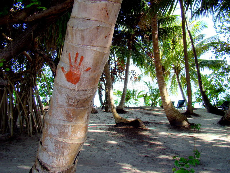 Download Hand-print On A Palm Tree At The Maldives Stock Image - Image of asian, resort: 15345137