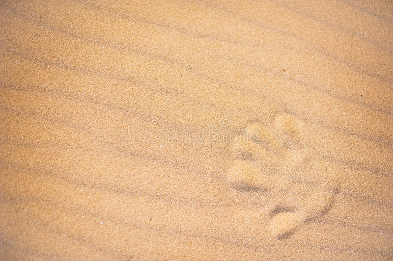 Hand print in the sand of a beach stock photos