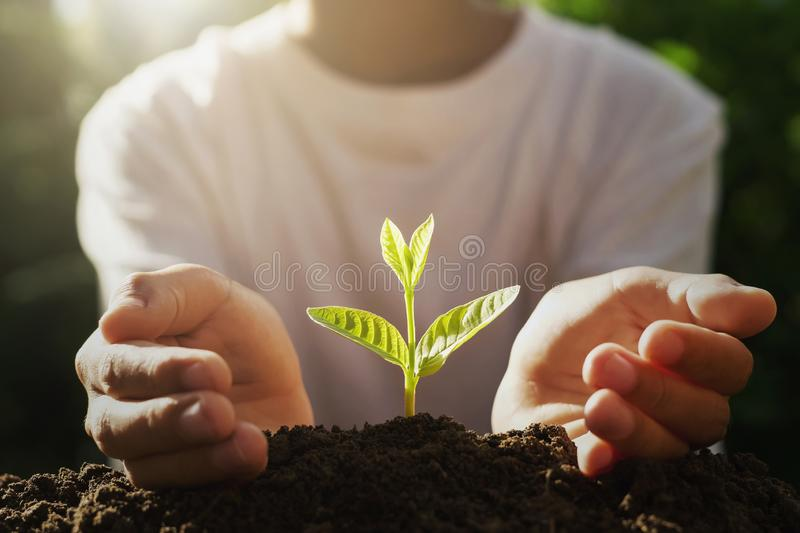 hand protection small tree on soil with sunrise royalty free stock photography
