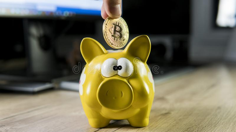 Hand putting golden bitcoin in to piggy bank money box with a computer on background. Cryptocurrency investment concept. BTC coin as symbol of electronic stock images