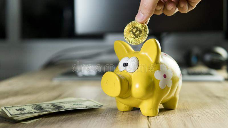 Hand putting golden bitcoin in to piggy bank money box with a computer on background. Cryptocurrency investment concept royalty free stock images