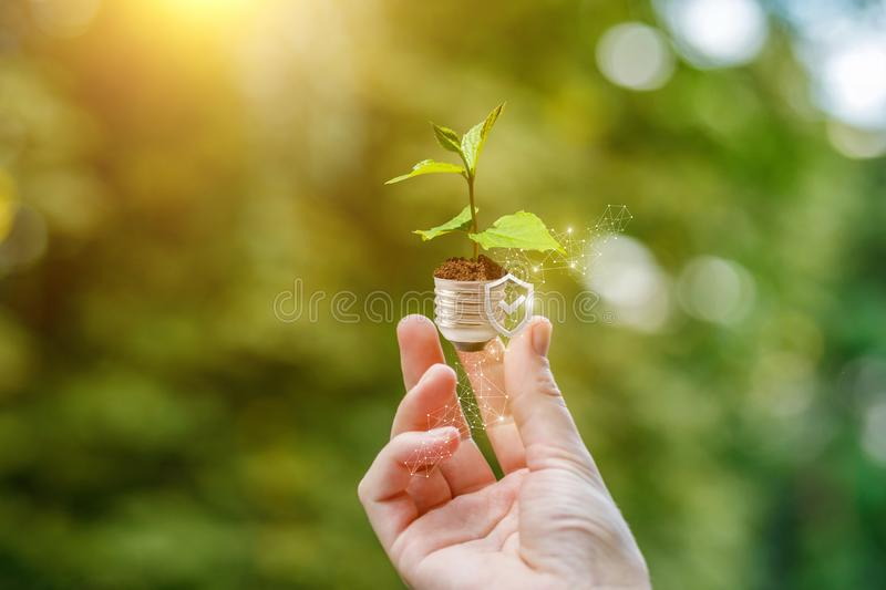 A hand putting a young plant sprout up with a small shield backside . stock photo