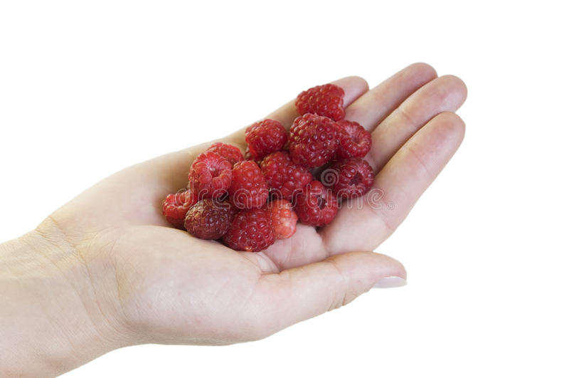 Download Hand with raspberries stock image. Image of dessert, background - 14862405