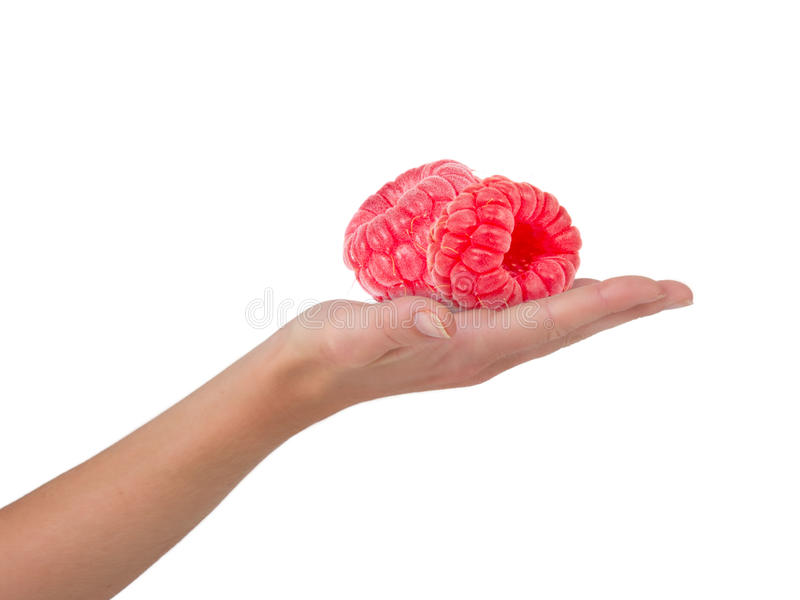 Hand with raspberries royalty free stock image