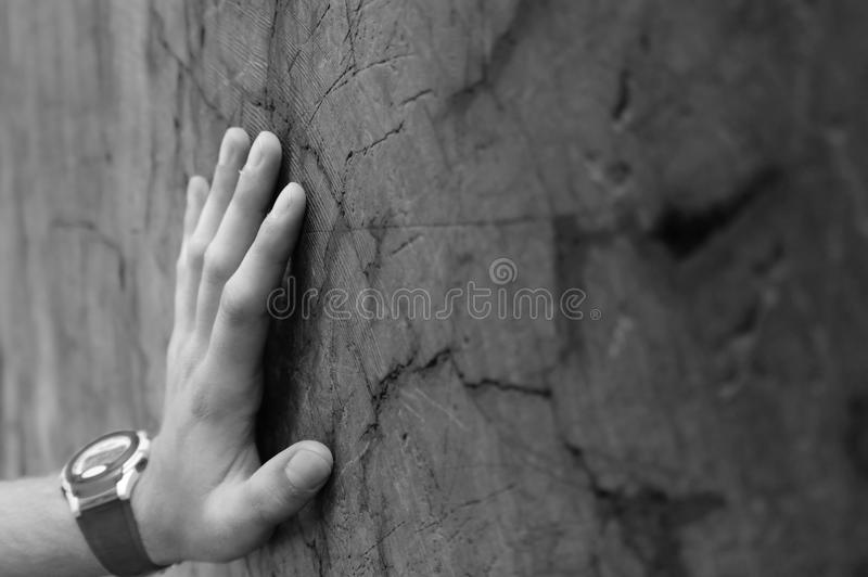Download Hand on Redwood Trunk stock image. Image of redwood, white - 20541013