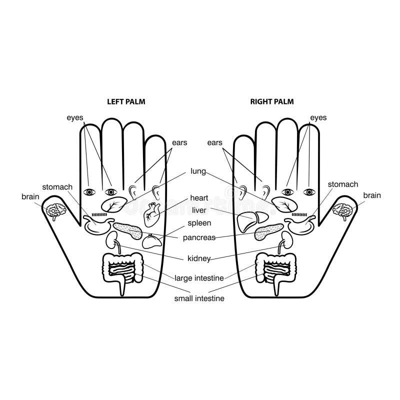 Outline hand reflexology chart vector illustration. stock illustration