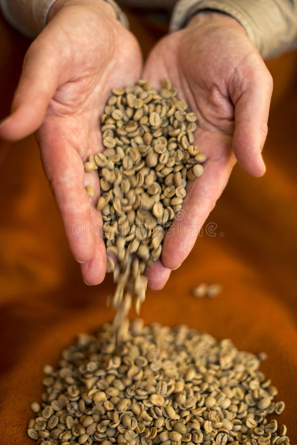 Hand releasing raw coffee beans stock photos