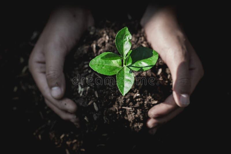 Hand schützt Sämlinge, die wachsen, Umwelt-Tag der Erde in den Händen von den Bäumen, die Sämlinge wachsen, verringern die global lizenzfreie stockfotografie