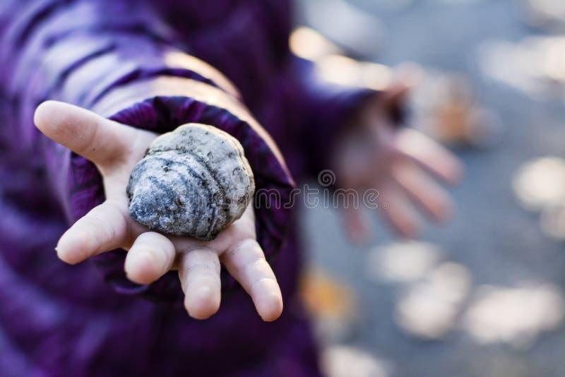 Hand, Seashell, Close Up, Finger stock photography