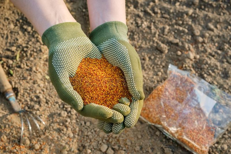 Hand with seeds. Women hand planting seeds. royalty free stock photo