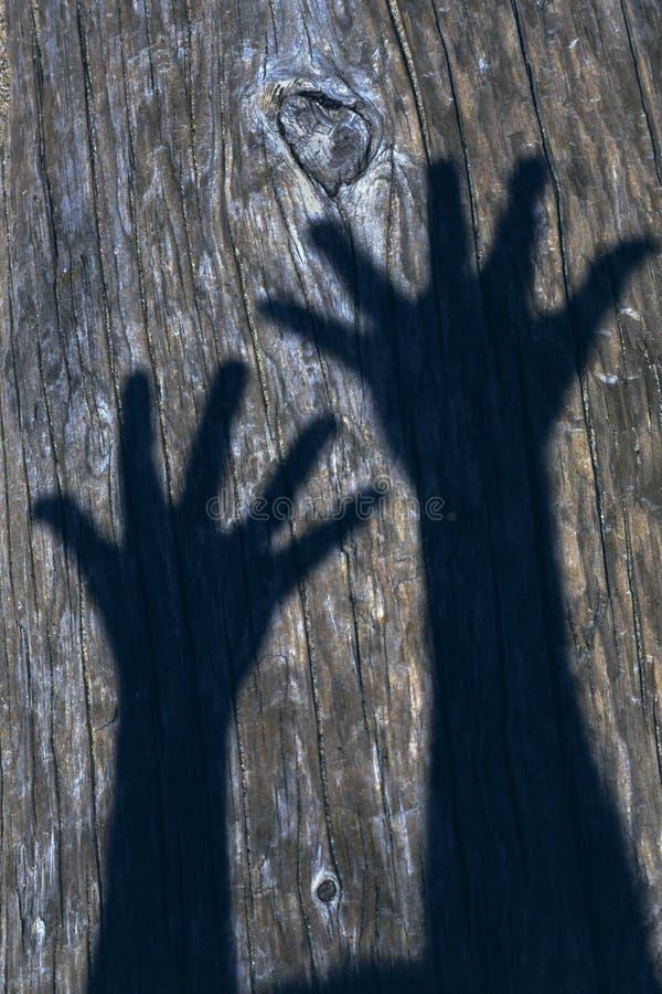 Free Hand Shadows Royalty Free Stock Photography - 14056667